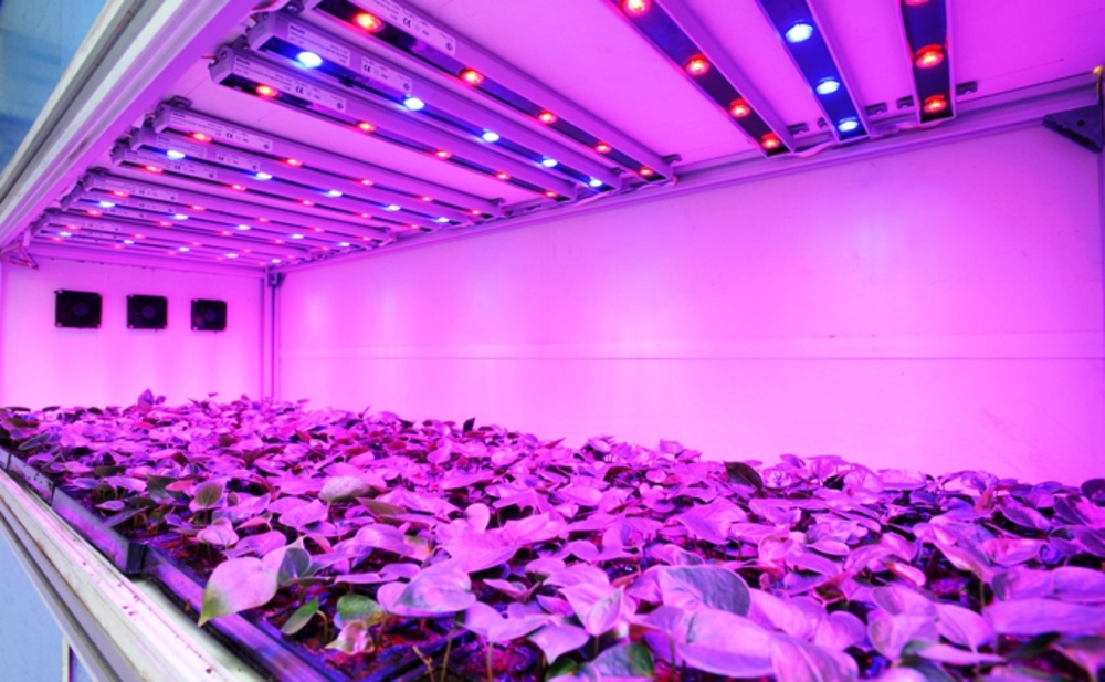 <p>Horticulture LED Lighting Market</p>