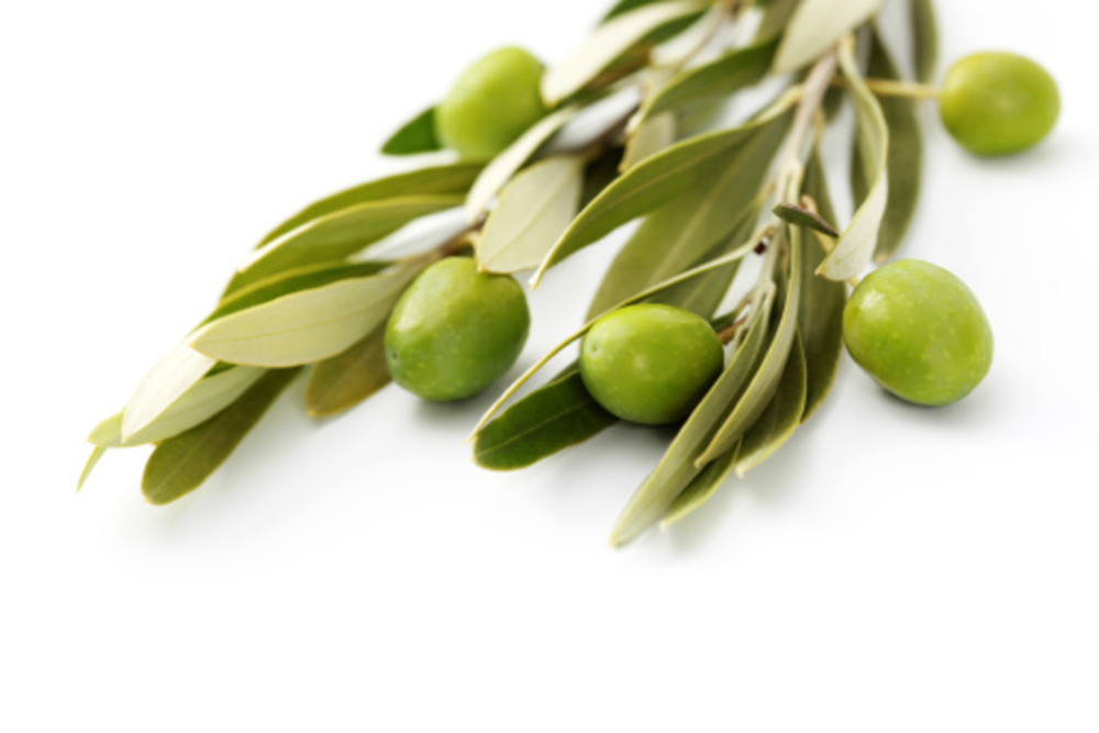 <p>Olive Leaf Extract System Market</p>